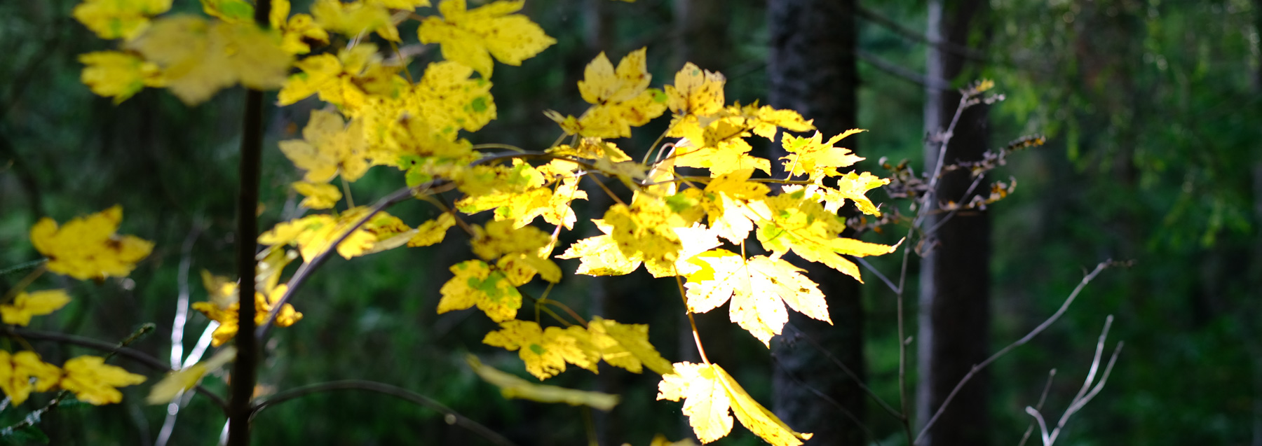 Herbstspaziergang im Zauberwald